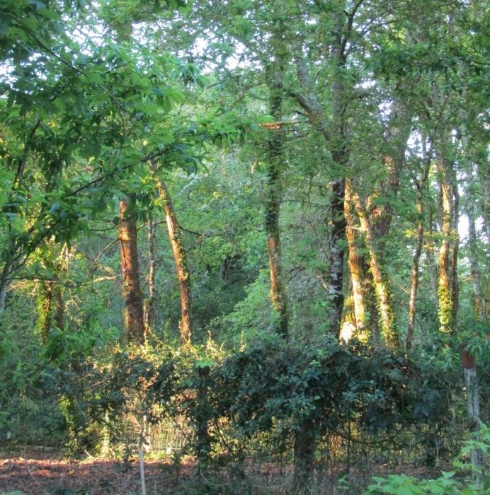 雑木林に朝陽射して…… 。_b0287748_02290100.jpg