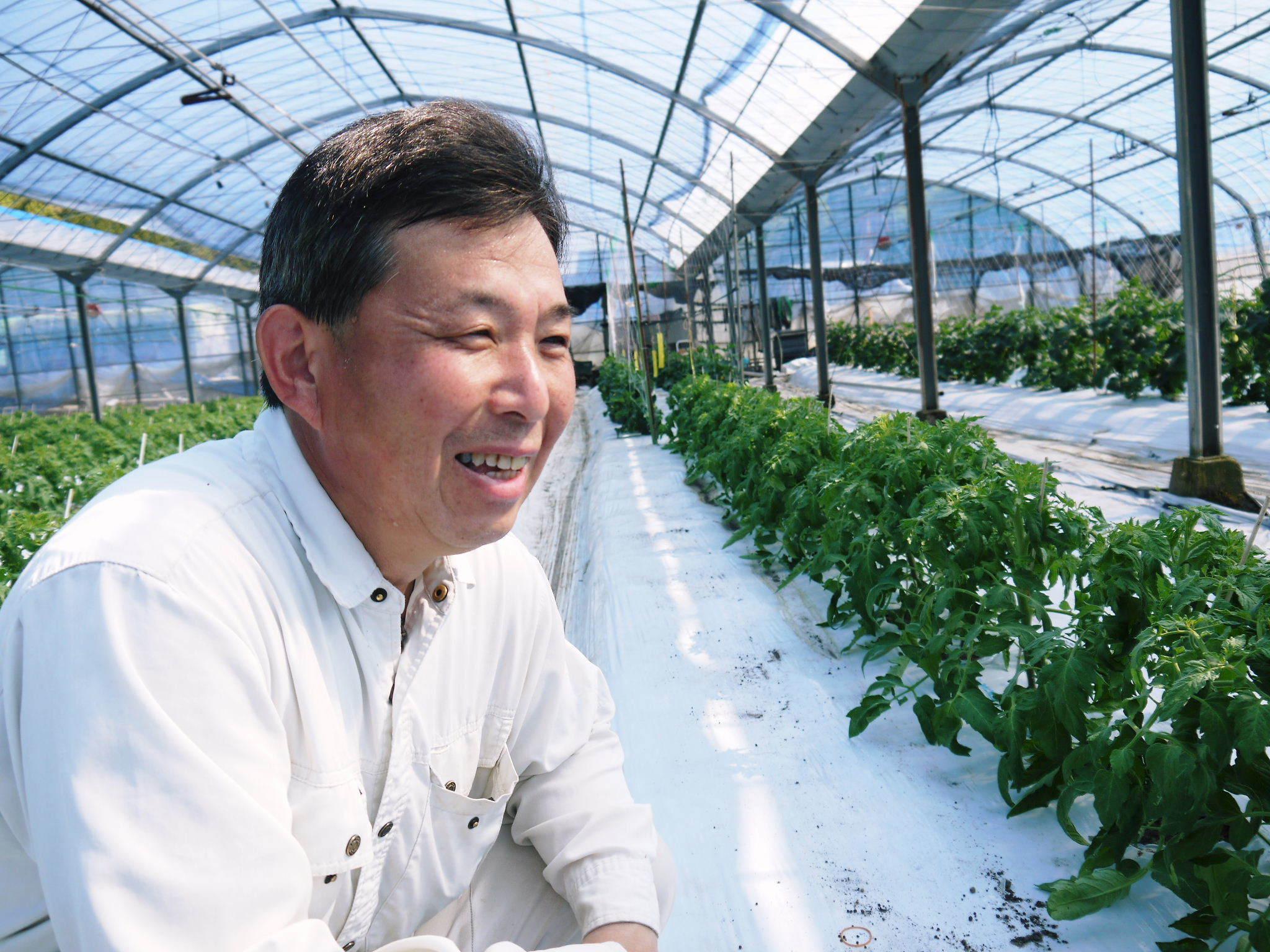 樹上完熟の朝採りトマト 元気に育成長中!そして、新品種のトマトを定植したとのこと!さっそく現地取材! _a0254656_17530875.jpg