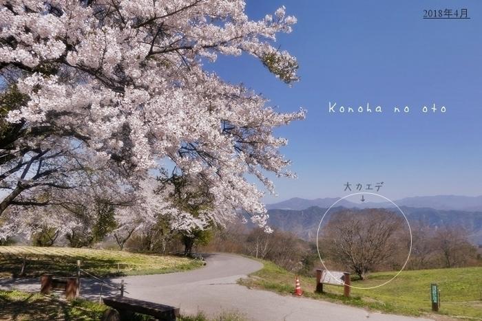 [一昨年]ある春の日_a0160657_00290212.jpg