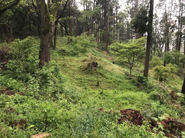 六国見山に植樹したヤマアジサイ間もなく開花5・4_c0014967_11502942.jpg