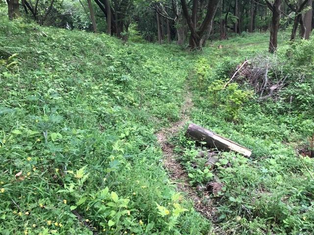 六国見山に植樹したヤマアジサイ間もなく開花5・4_c0014967_12014046.jpg
