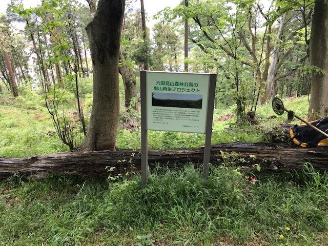 六国見山に植樹したヤマアジサイ間もなく開花5・4_c0014967_12024986.jpg