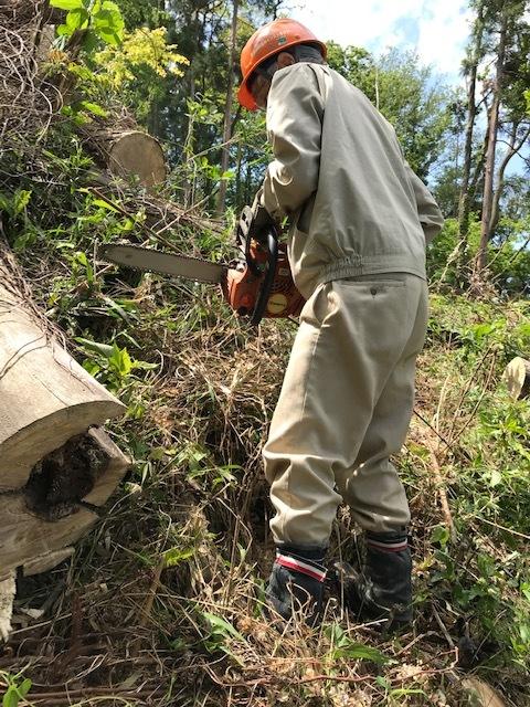 ハチの巣候補処理にフェリングレバーが威力5・5_c0014967_16012095.jpg