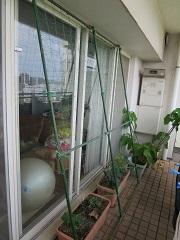 グリーンカーテン用ネットの設置_f0045667_17380258.jpg