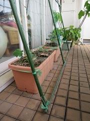 グリーンカーテン用ネットの設置_f0045667_17383838.jpg