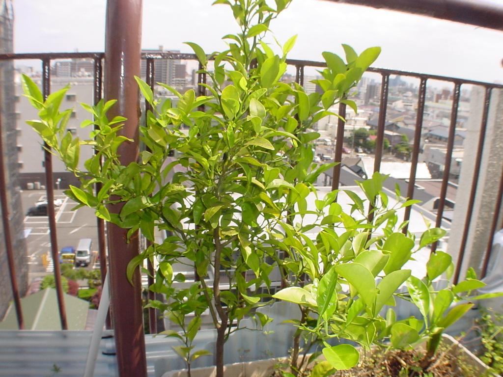 謎の植物のその後_f0134369_13265694.jpg