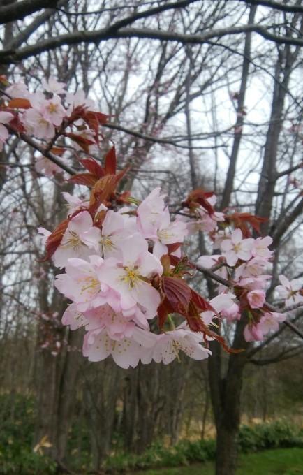ララちゃんとお花見。_c0209379_17274263.jpg