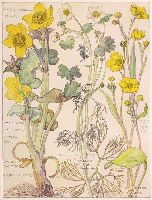 H. Isabel Adams:野の花々に癒される_c0084183_14460932.jpg