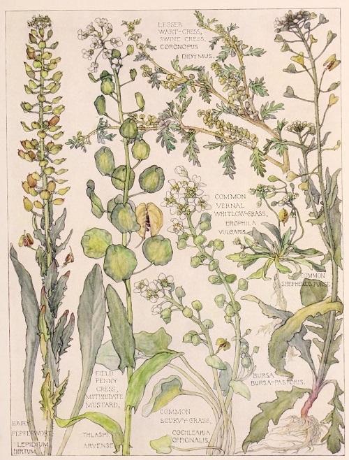 H. Isabel Adams:野の花々に癒される_c0084183_14461489.jpg