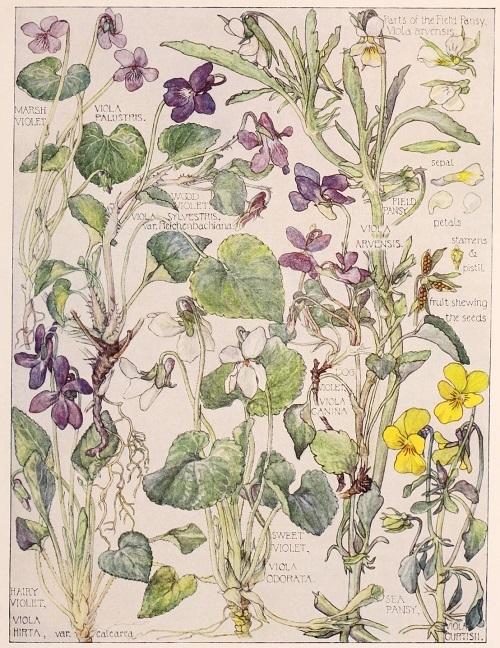 H. Isabel Adams:野の花々に癒される_c0084183_14461817.jpg