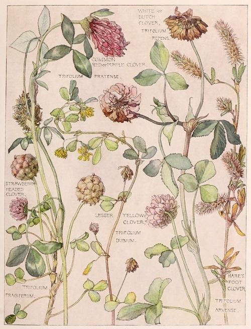 H. Isabel Adams:野の花々に癒される_c0084183_14462215.jpg