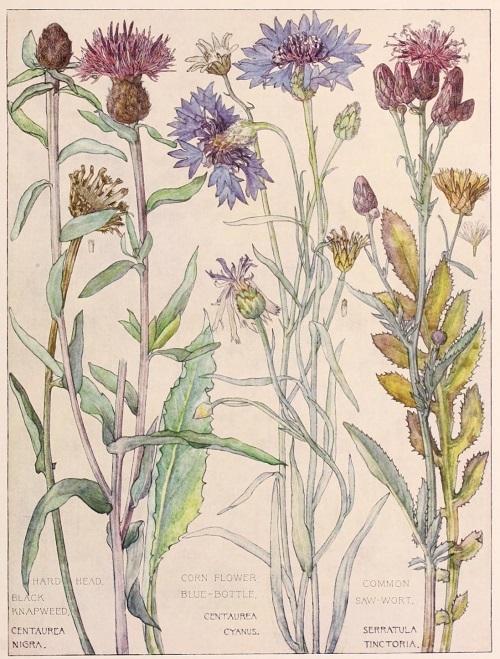 H. Isabel Adams:野の花々に癒される_c0084183_14463018.jpg