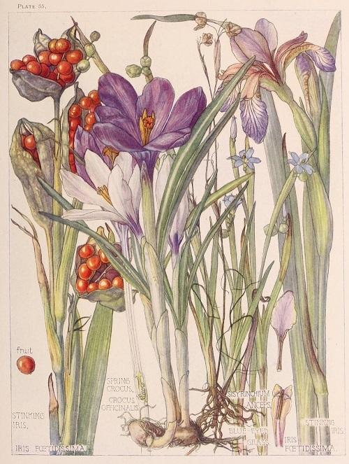H. Isabel Adams:野の花々に癒される_c0084183_14505747.jpg
