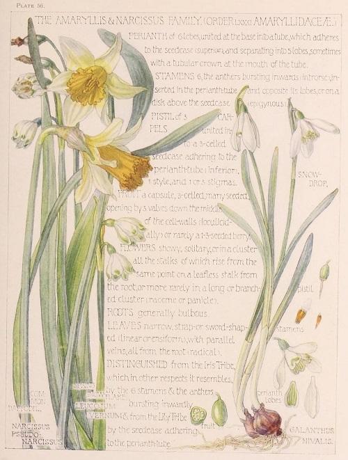 H. Isabel Adams:野の花々に癒される_c0084183_14510194.jpg