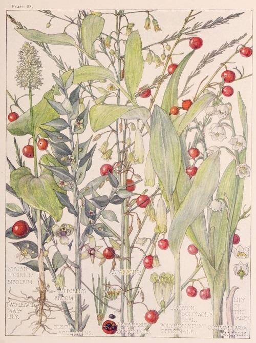 H. Isabel Adams:野の花々に癒される_c0084183_14510509.jpg