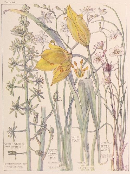 H. Isabel Adams:野の花々に癒される_c0084183_14510809.jpg