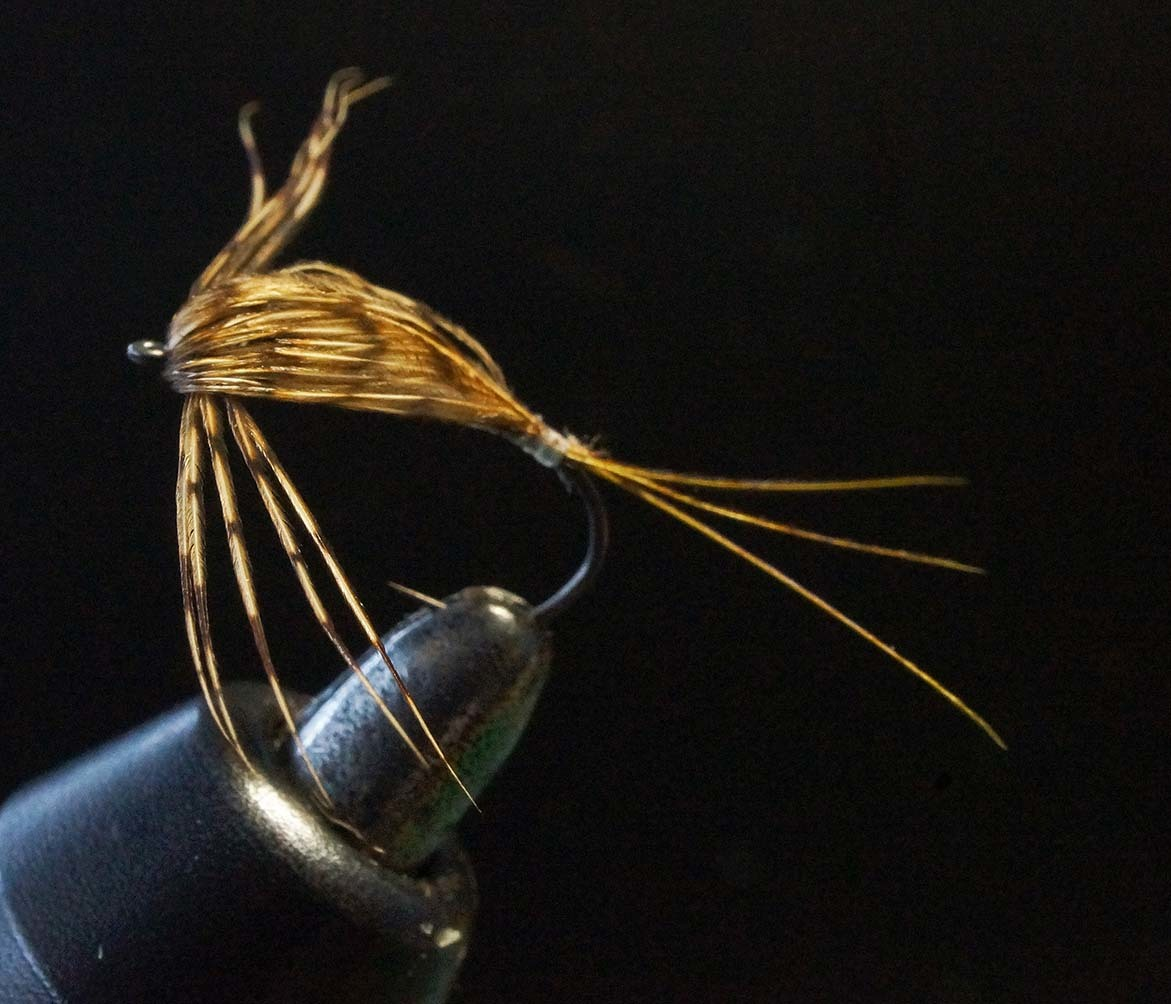 Partridge(Brown Back)nymph_c0095801_07161862.jpg