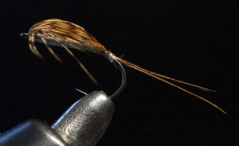 Partridge(Brown Back)nymph_c0095801_07162274.jpg