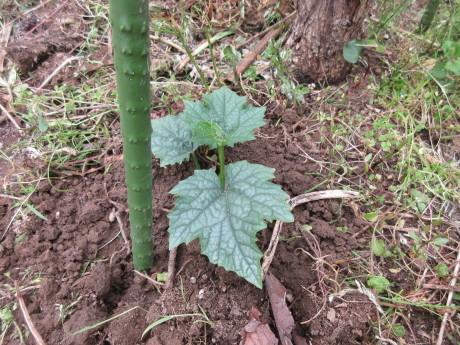 植えたもの、蒔いたもの。ピース閉め出される_a0203003_13591881.jpg