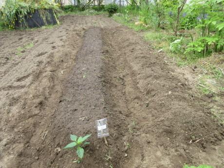 植えたもの、蒔いたもの。ピース閉め出される_a0203003_14011403.jpg