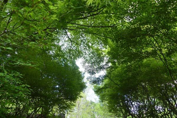 宝ヶ池 雑木林も新緑_e0048413_21043627.jpg