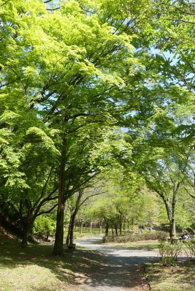 宝ヶ池 雑木林も新緑_e0048413_21050443.jpg