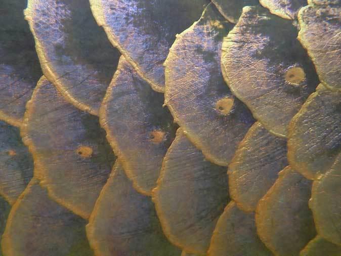 上野動物園・両生爬虫類館:アロワナ最接近!~ジムグリの幼蛇(June 2019)_b0355317_21202168.jpg