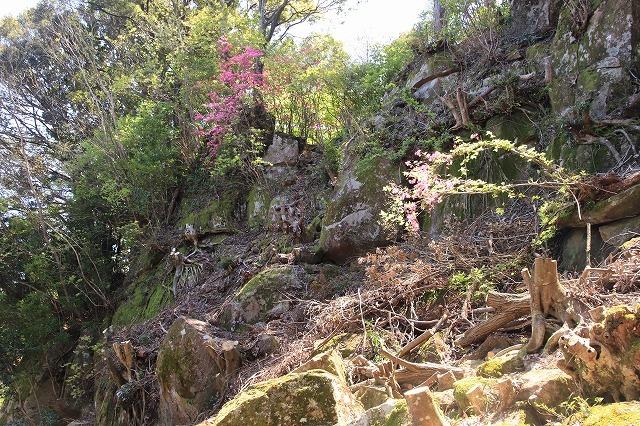 城跡に巨木の山桜(撮影:4月5日)_e0321325_16410894.jpg