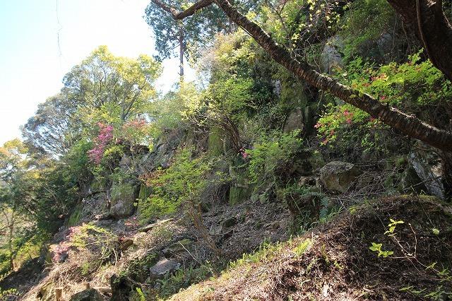城跡に巨木の山桜(撮影:4月5日)_e0321325_16443621.jpg