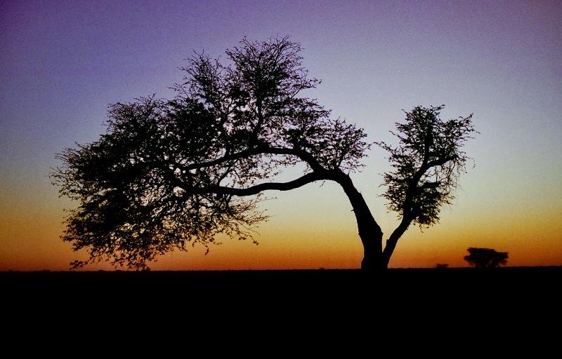 アフリカの記憶 006_d0010432_20401721.jpg