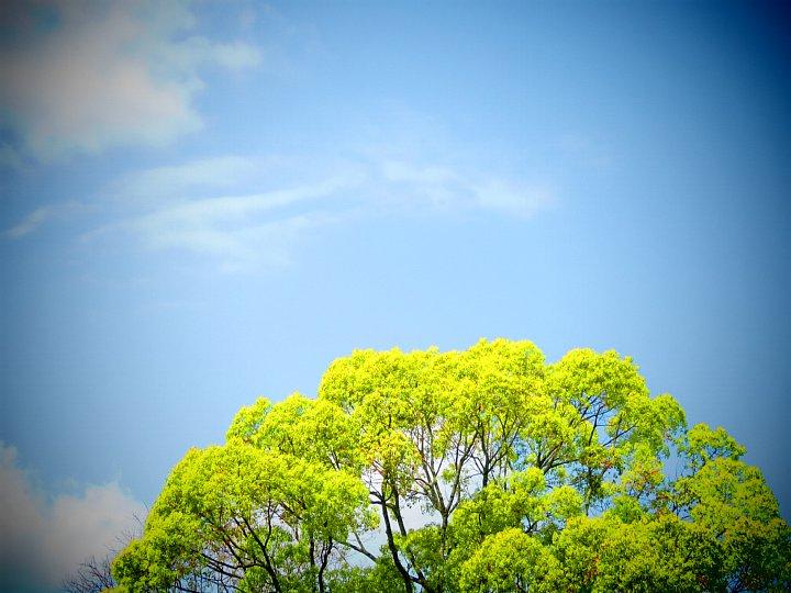 2020年5月8日 緑かがやく  !(^^)!_b0341140_17535941.jpg