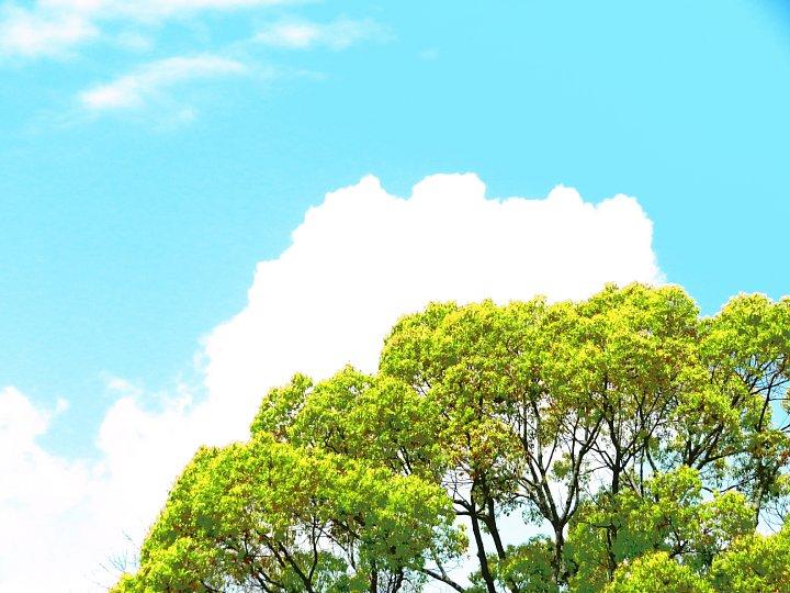 2020年5月8日 緑かがやく  !(^^)!_b0341140_17541989.jpg