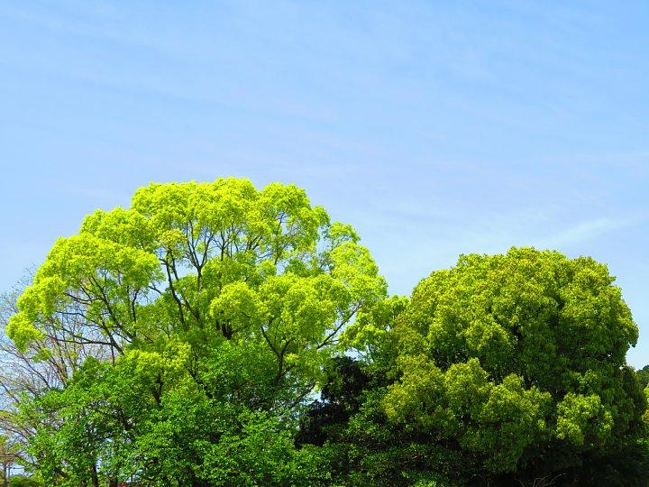 2020年5月8日 緑かがやく  !(^^)!_b0341140_74022100.jpg