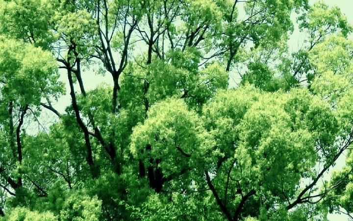 2020年5月8日 緑かがやく  !(^^)!_b0341140_7405175.jpg