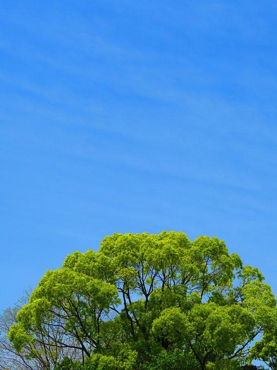 2020年5月8日 緑かがやく  !(^^)!_b0341140_740742.jpg