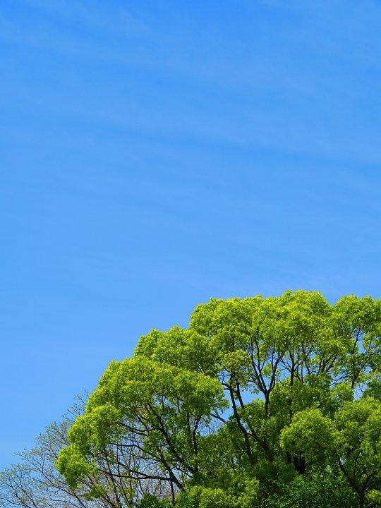 2020年5月8日 緑かがやく  !(^^)!_b0341140_7411780.jpg