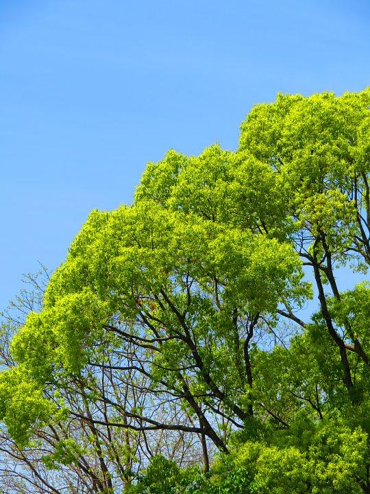 2020年5月8日 緑かがやく  !(^^)!_b0341140_7412873.jpg