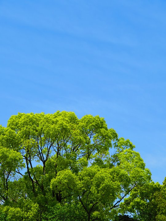 2020年5月8日 緑かがやく  !(^^)!_b0341140_741443.jpg