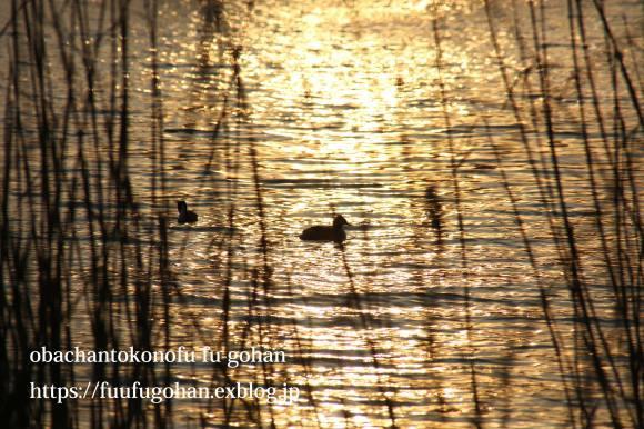 最近の手抜き御飯&琵琶湖の夕暮れ散歩_c0326245_11095302.jpg