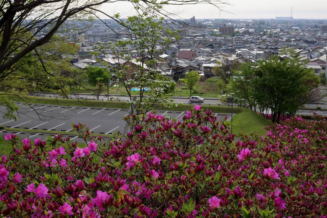 花咲く丘_e0403850_22585160.jpg