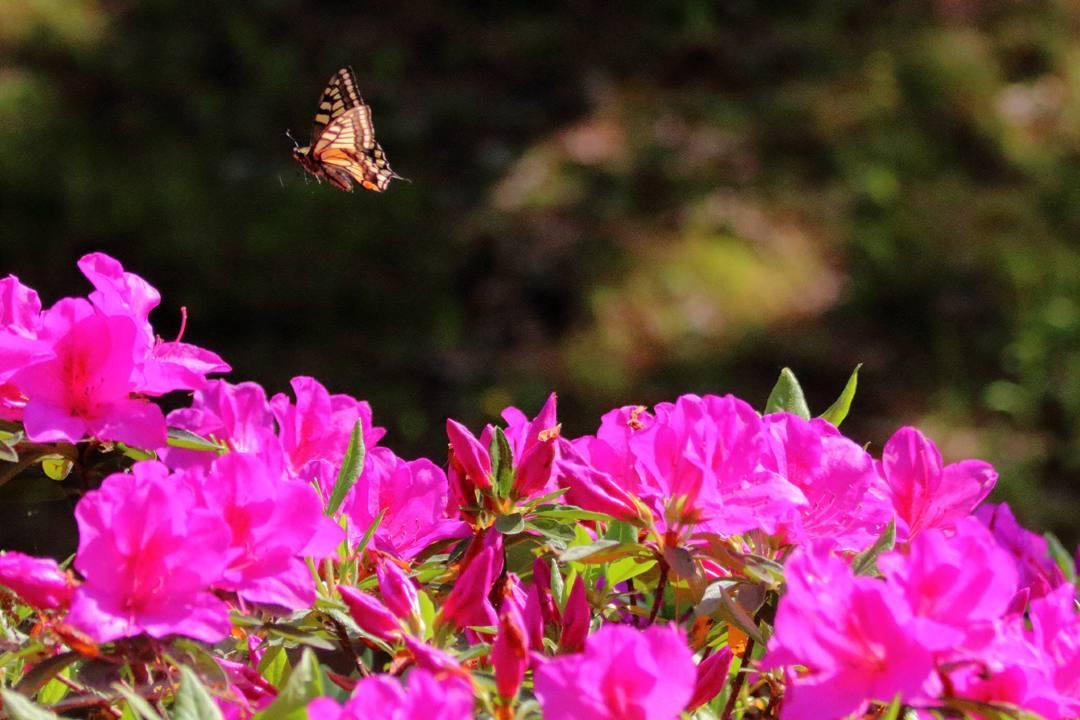 花咲く丘_e0403850_22590872.jpg