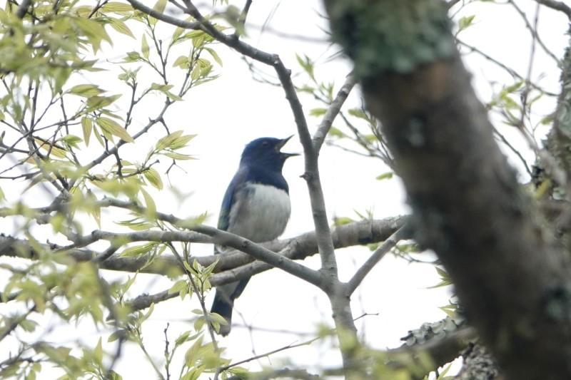 野鳥トレ 207 武庫川野鳥探索_b0227552_18441059.jpg