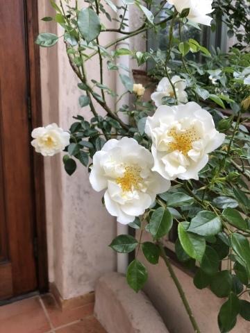 お庭が賑やかです♬_c0185459_15452519.jpeg