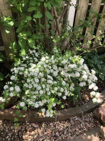 お庭が賑やかです♬_c0185459_15460116.jpeg