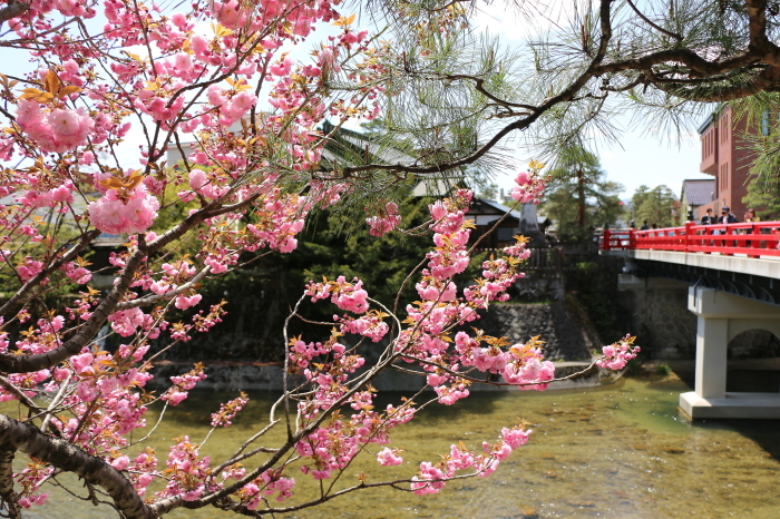 2019GW  飛騨高山の桜_c0338583_20060682.jpg