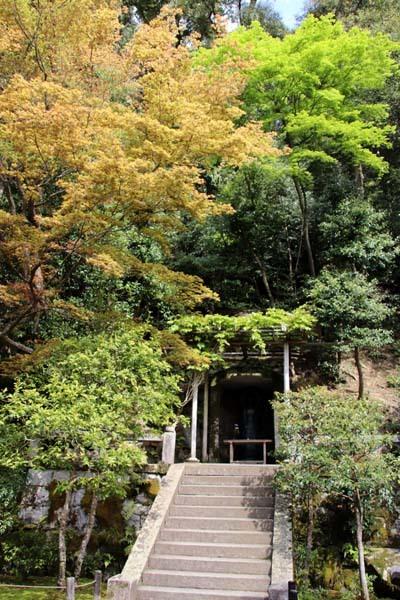 法然院 新緑の盛り_e0048413_21262070.jpg
