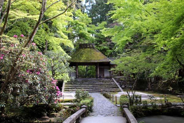 法然院 新緑の盛り_e0048413_21263356.jpg