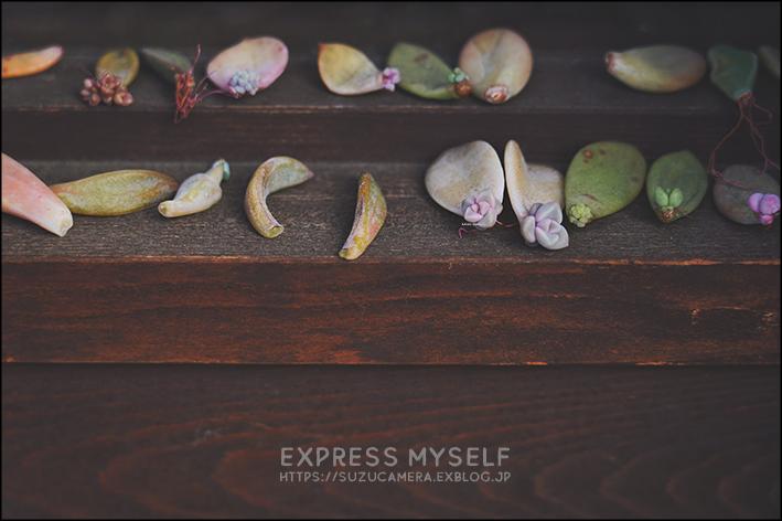 express myself_f0100215_22230603.jpg