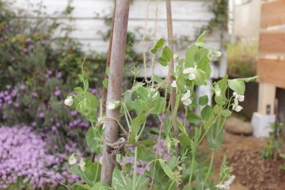 庭で朝ごはん_b0132338_07410041.jpeg