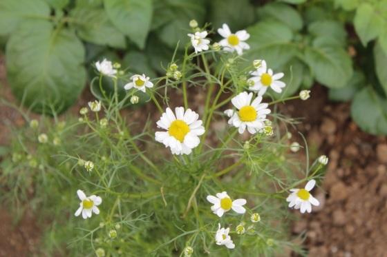 庭で朝ごはん_b0132338_07410786.jpeg